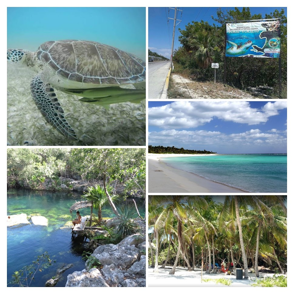 Playa Xcacel y cenote Xcacelito