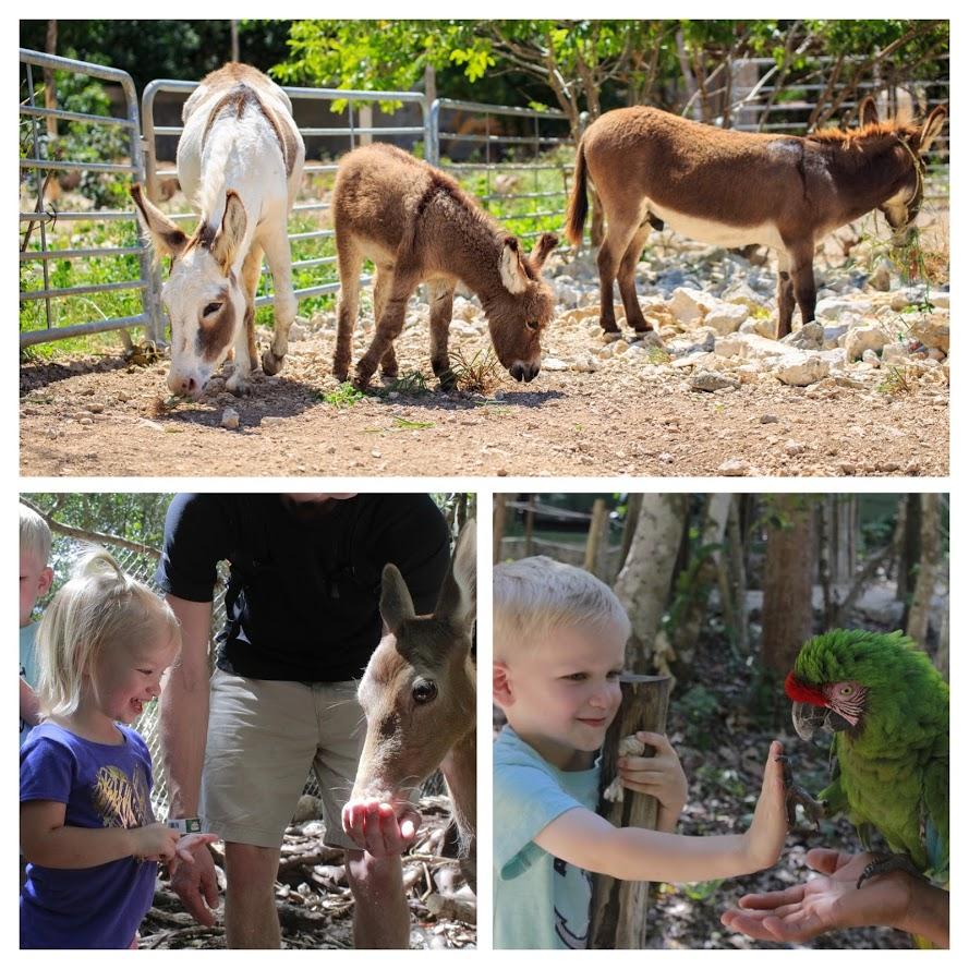 Ven a visitar el santuario de los monos y de animales rescatados