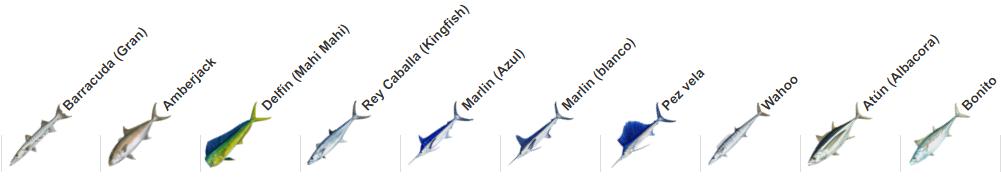 Especies para la pesca en Playa del Carmen