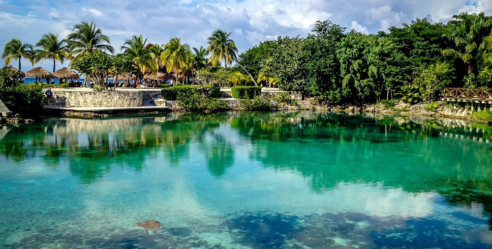 En el Parque Chankanaab también podrás nadar con delfines, practicar buceo o snorkel y ver a los leones marinos