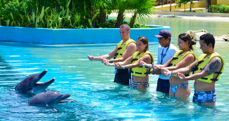 Lugares en Isla Mujeres para nadar con delfines