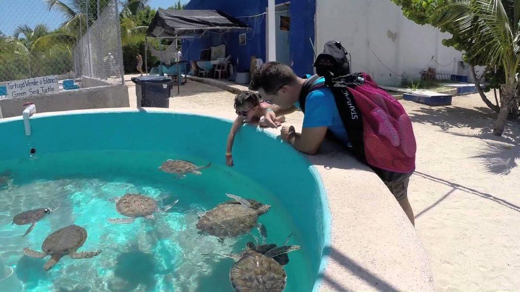 ¿Por qué visitar Tortugranja en Isla Mujeres?