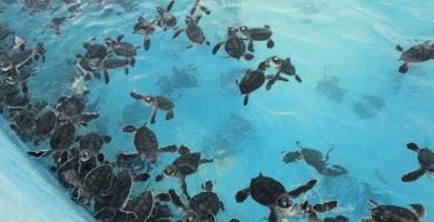 Tortugranja de Isla Mujeres