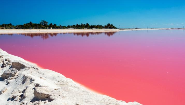 ¿Porque el color rosa de las coloradas?