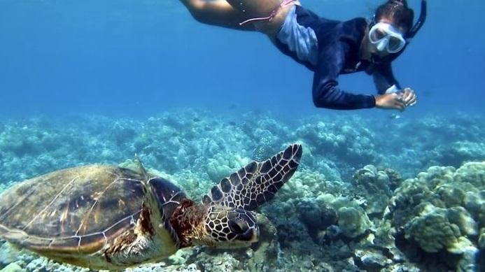 Respeta el nado con tortugas en akumal